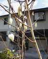 haru_004